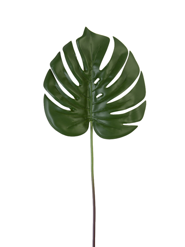 """Picture of 23.5"""" MONSTERA STEM"""