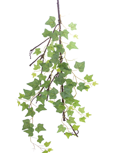 """Picture of 37"""" ENGLISH IVYVINE"""