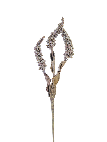 """Picture of 19"""" DRIED SEED STEMS X3"""